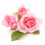 Arôme Rose