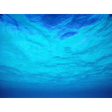Menthe bleue